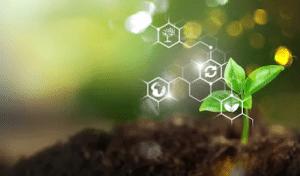 Biochimie chémotype plante