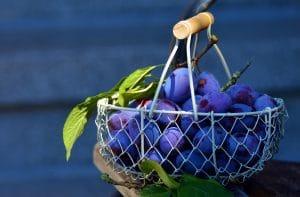 panier de prune